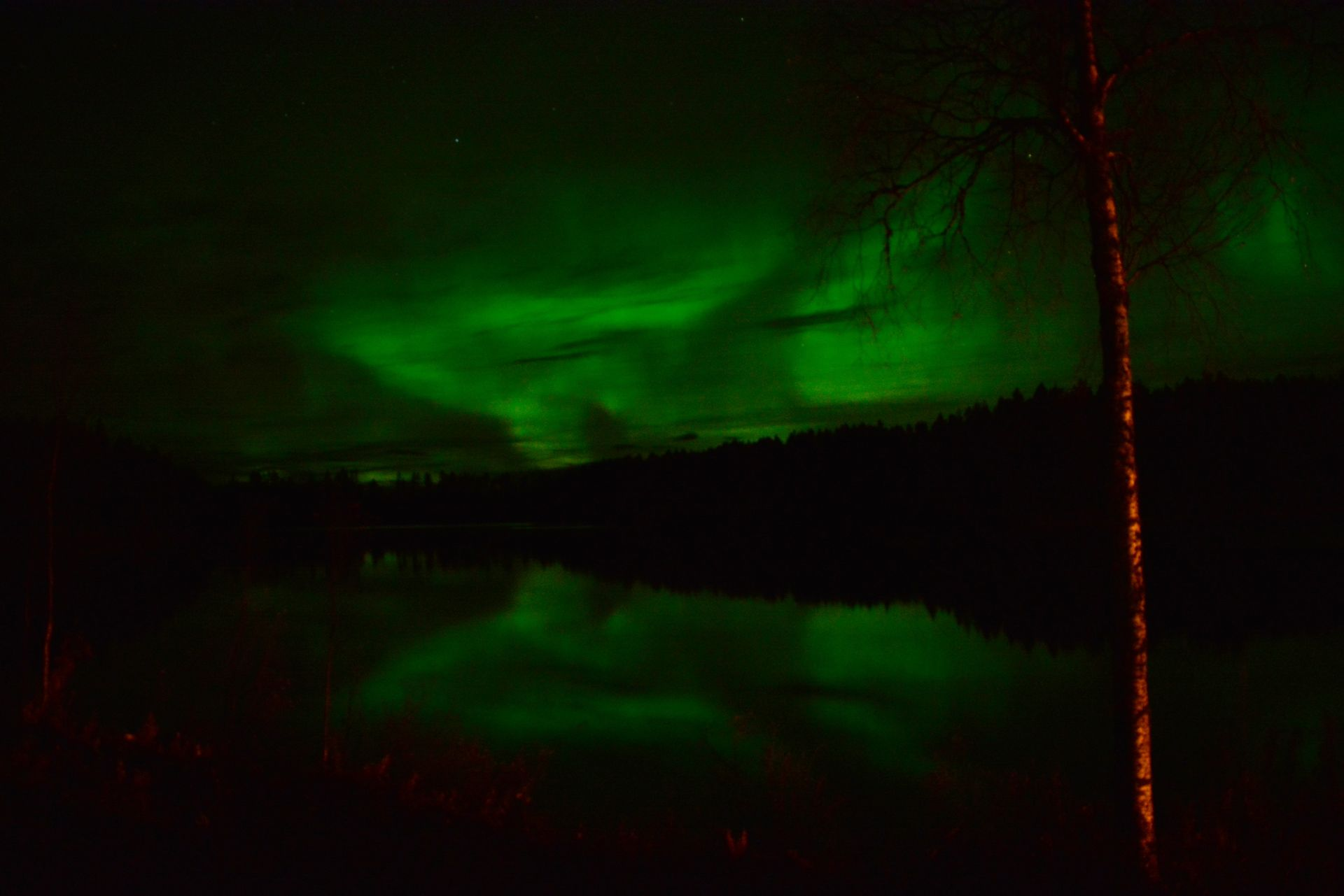 Northern Lights at Wilderness Life