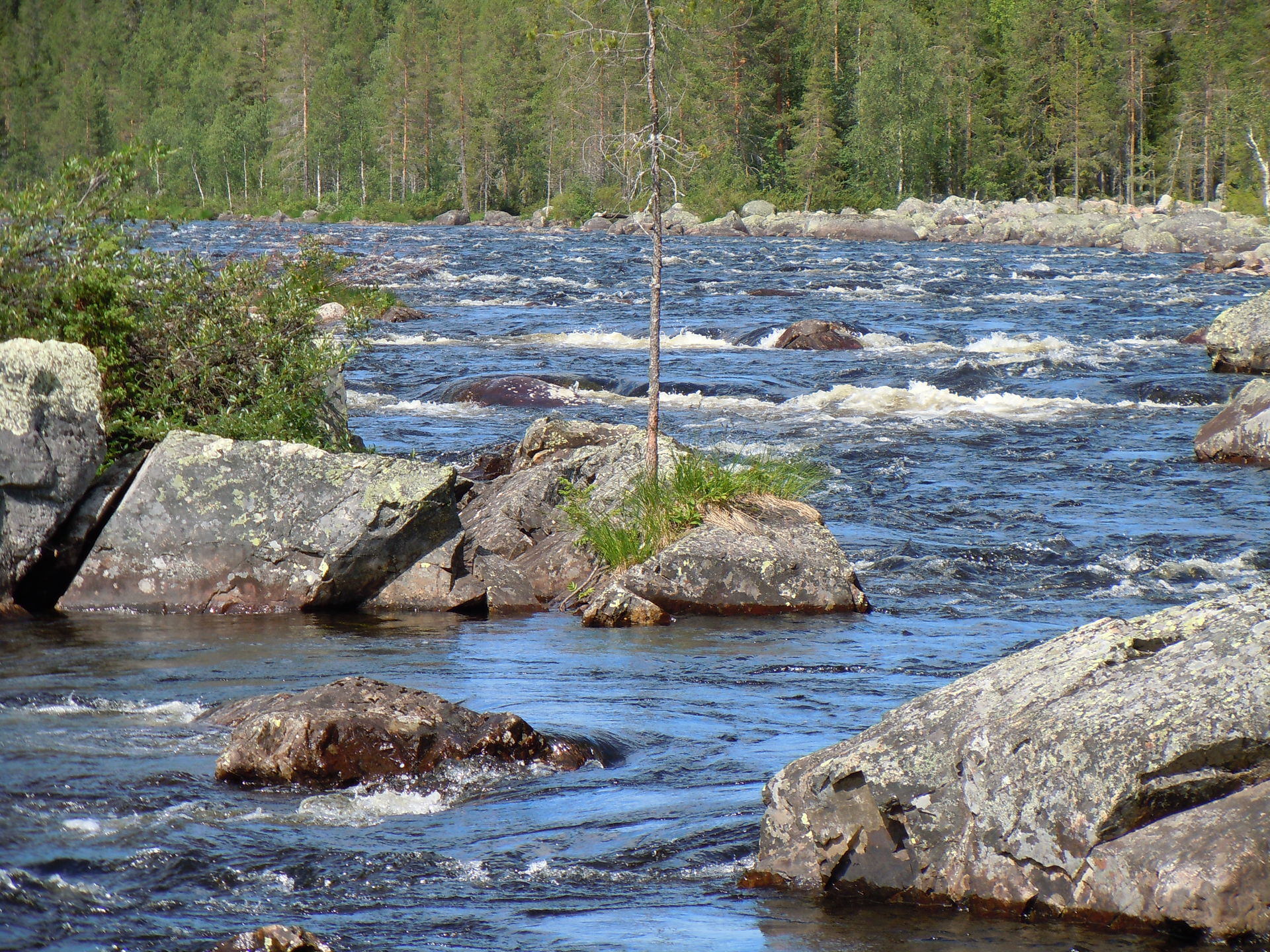 Fly fish at Wilderness Life fishing camp in Lapland