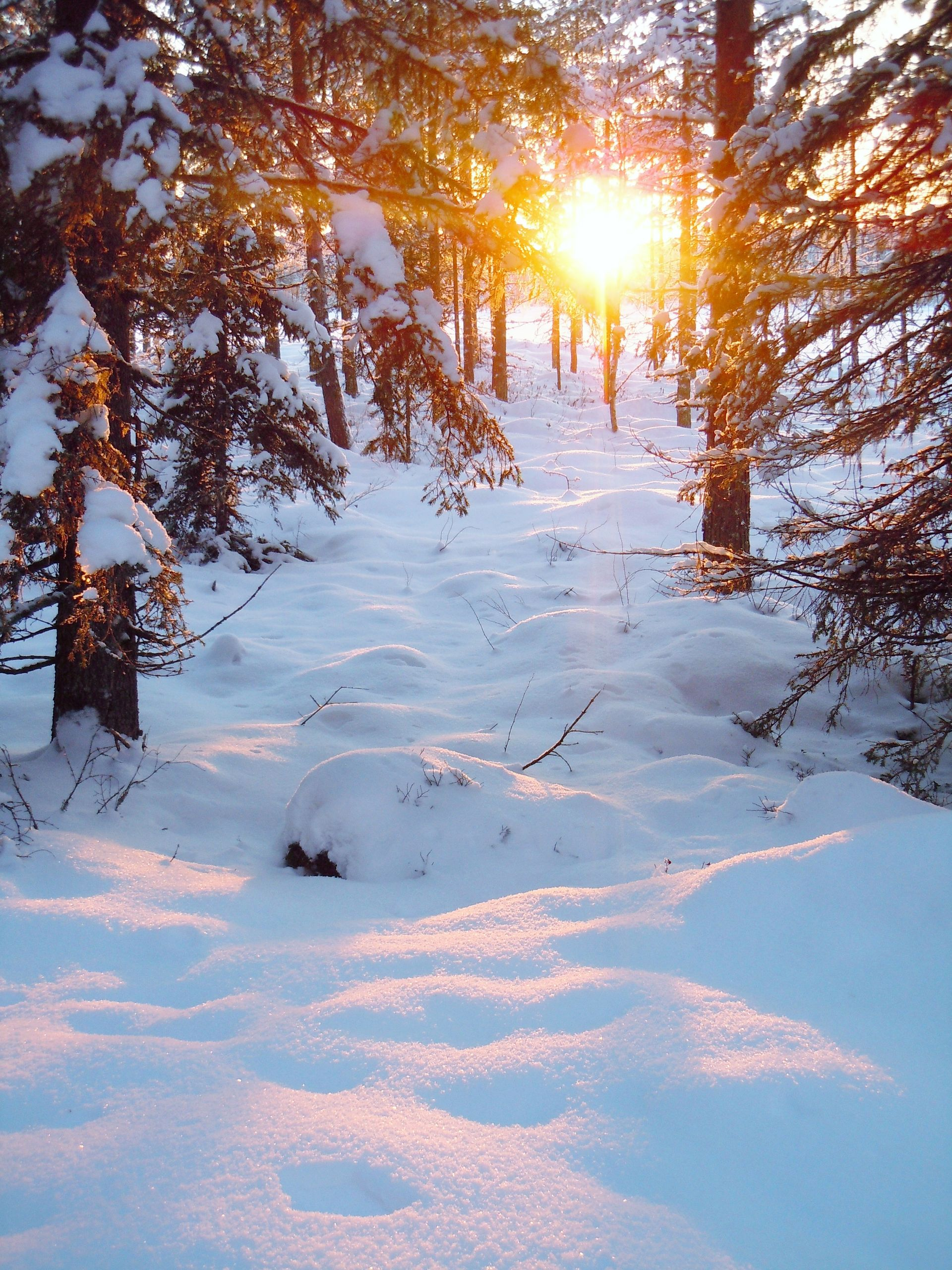 Snowshoe hiking in Lapland