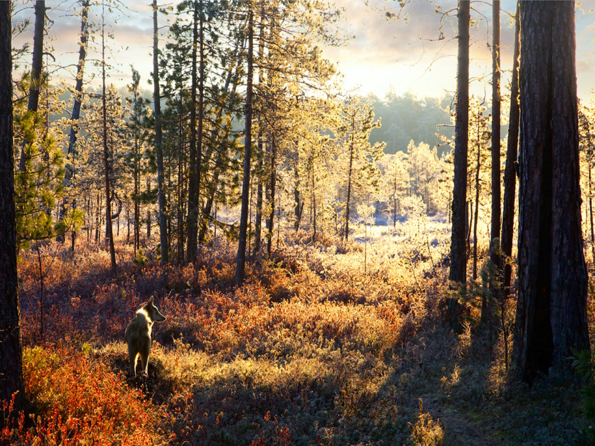 Hunting in beautiful nature and suroundings in Lapland