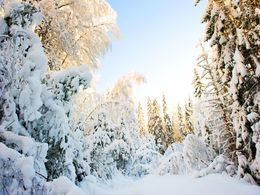Winter adventures and activities in Lapland