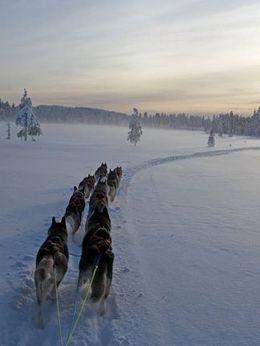Go dog sledding in Lapland